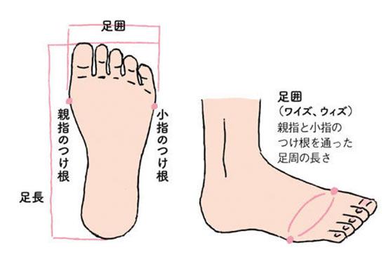 足のサイズ イラスト